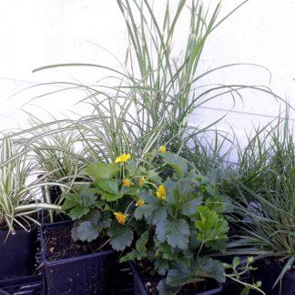 Makkelijke Planten halfzon/halfschaduw pakket