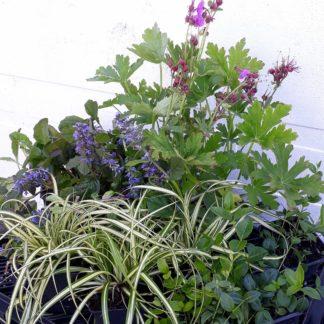 Makkelijke Planten schaduw pakket