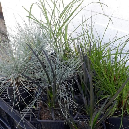 Makkelijke Planten zon pakket
