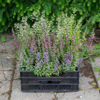 Makkelijke Planten bijen pakket