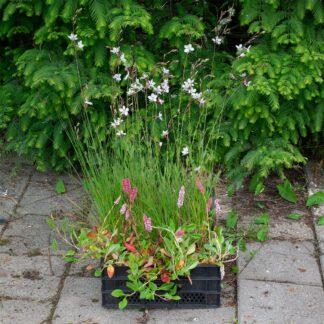 Makkelijke Planten border pakket